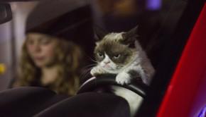 grumpycat-1
